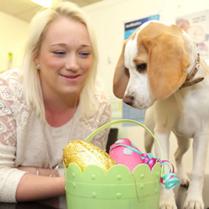 Jessie the beagle puppy with her owner Justine Parsons
