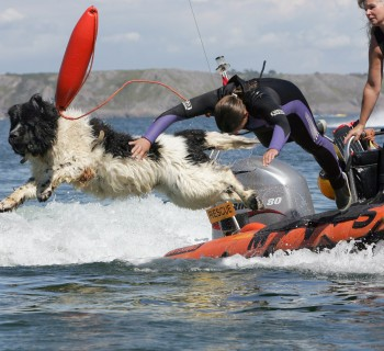 Picture by Grafic House : Swansea, 07903 809884. www.grafichouse.co.uk     grafic.house@ntlworld.com  Whizz the Newfoundland dog and Ellie Bedford practice their lifesaving skills at Oxwich bay, Gower, South Wales. The pair from Swindon work together as volunteer rescuers for the Royal Navy Reservists', the team train and work across the South of England and Wales.