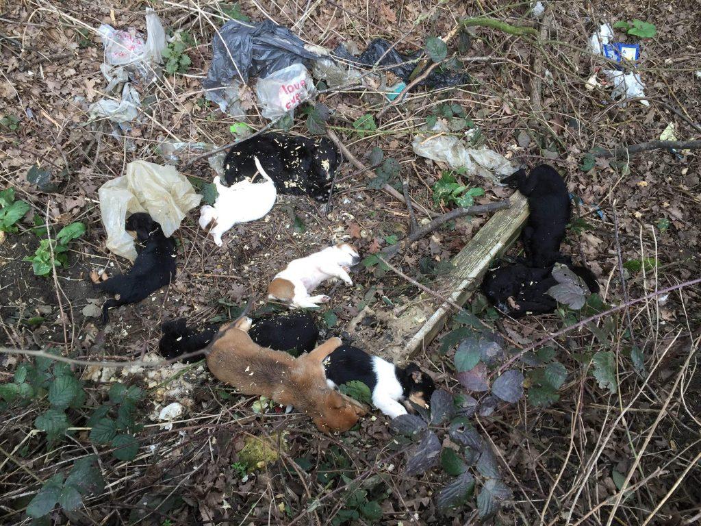 dead pups 1