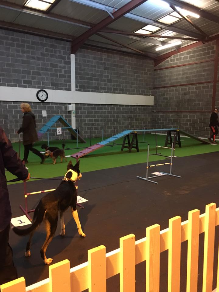 Wales First Dog Gym Opens Dogs Monthly