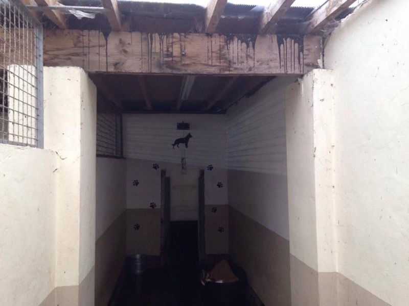 Kennels Entrance Leaky Roof 3