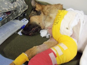 Lucca after emergency treatement in Afghanistan