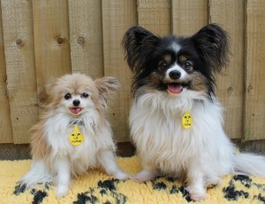 Photo 2 - Tiny Trudy is the smallest dog ever to arrive at Dogs Trust Manchester. She is pictured with her best friend, Cleo.