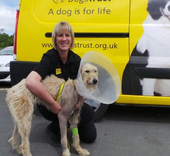 Photo - Woody is now recovering at the centre and receiving lots of TLC