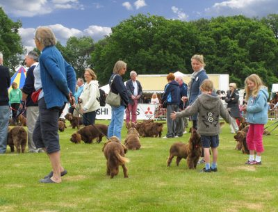 Sussexspaniels