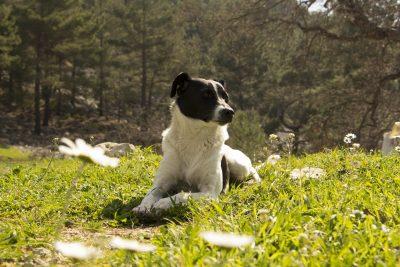 dog-1309898_1920