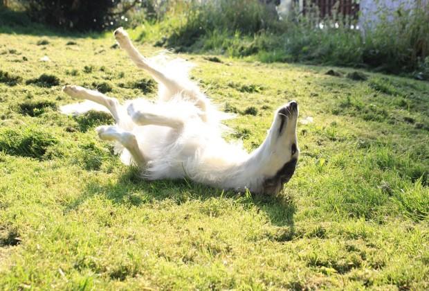 dog-633816_1280