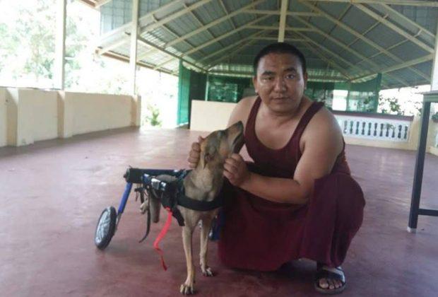 #2 HandicappedPets