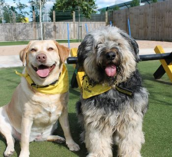Photo 1 - Trixie and Tye are the best of canine companions and have their paws crossed for a forever home together.