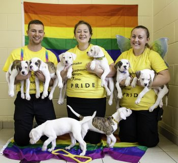 6. The Dogs Trust Manchester team will say a fond farewell to the pups and then head to the city centre to take part in the Pride Parade.
