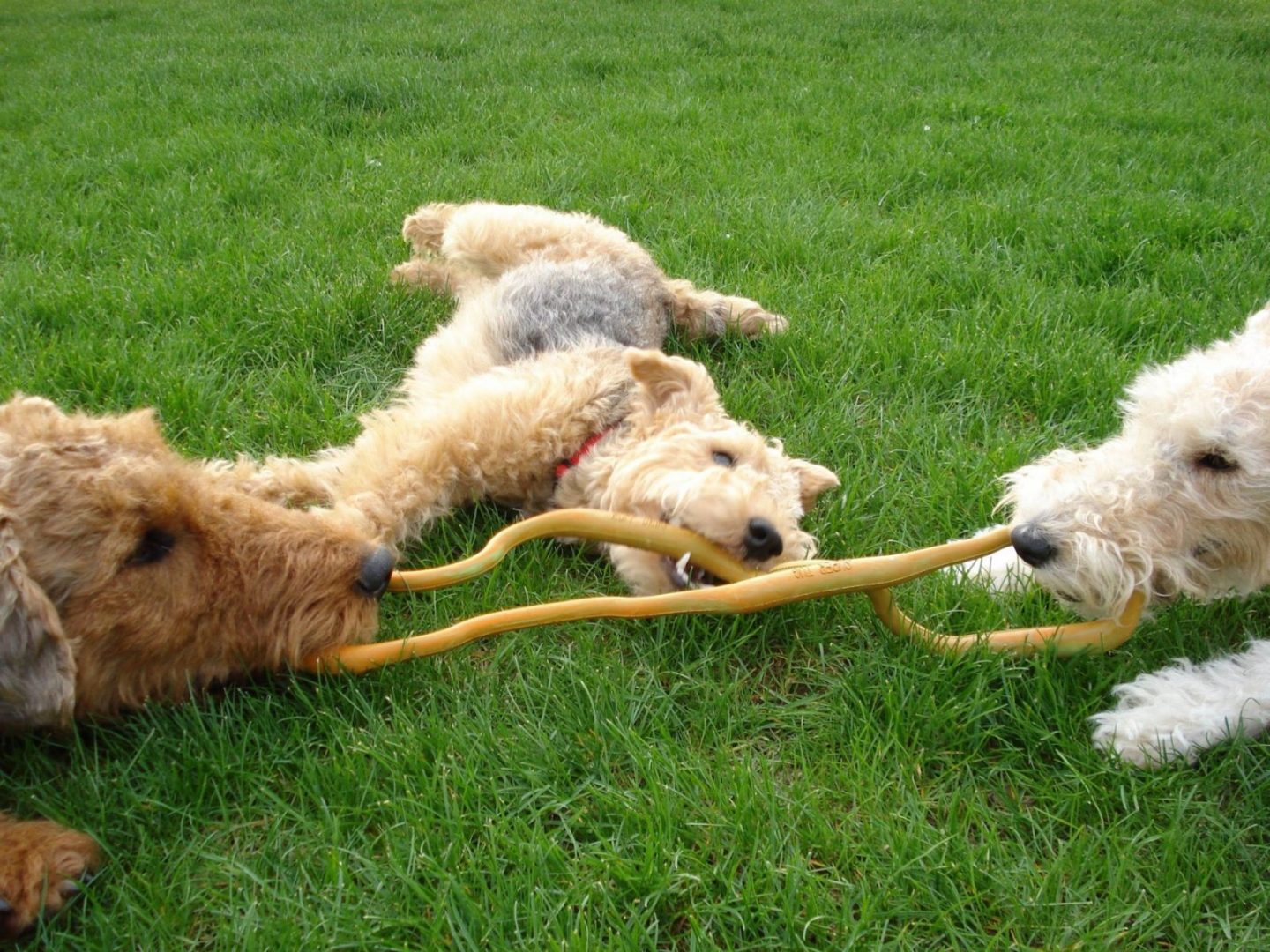 Lacie Bobeastie, USA. Three way tug of war