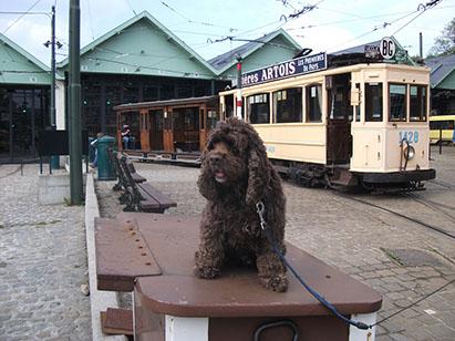 Tram museum in Brussels