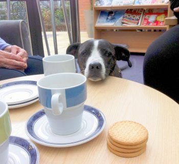 finn-eyeing-up-the-biscuits
