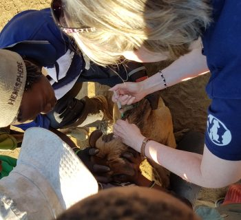 rabies-vaccination-programme