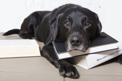 It turns out you can teach an old dog new tricks – a healthy diet of foods including salmon, sweet potato and peas can improve your dog's IQ, memory and response to commands. The study by tailor-made dog food experts tails.com found that nearly half of dog owners (48 per cent) think their dog has a higher than average IQ. 
