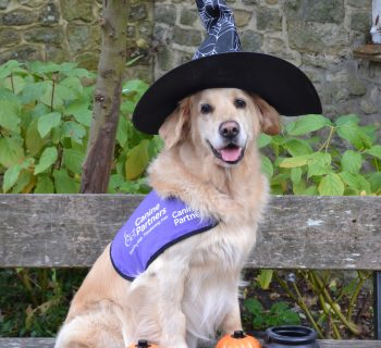 jenson-with-witches-hat-cauldron-and-pumpkins-4