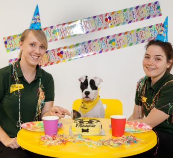 photo-1-puppy-daisy-who-is-deaf-was-the-special-guest-at-the-birthday-celebrations-credit-wendy-lovatt