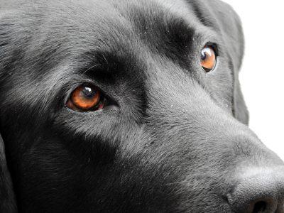 dog-1733145_1920