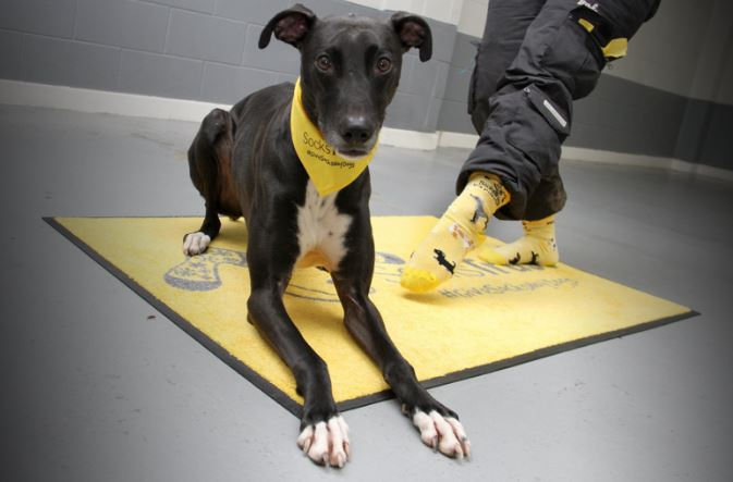 Dogs Trust Leeds How To Give A Dog