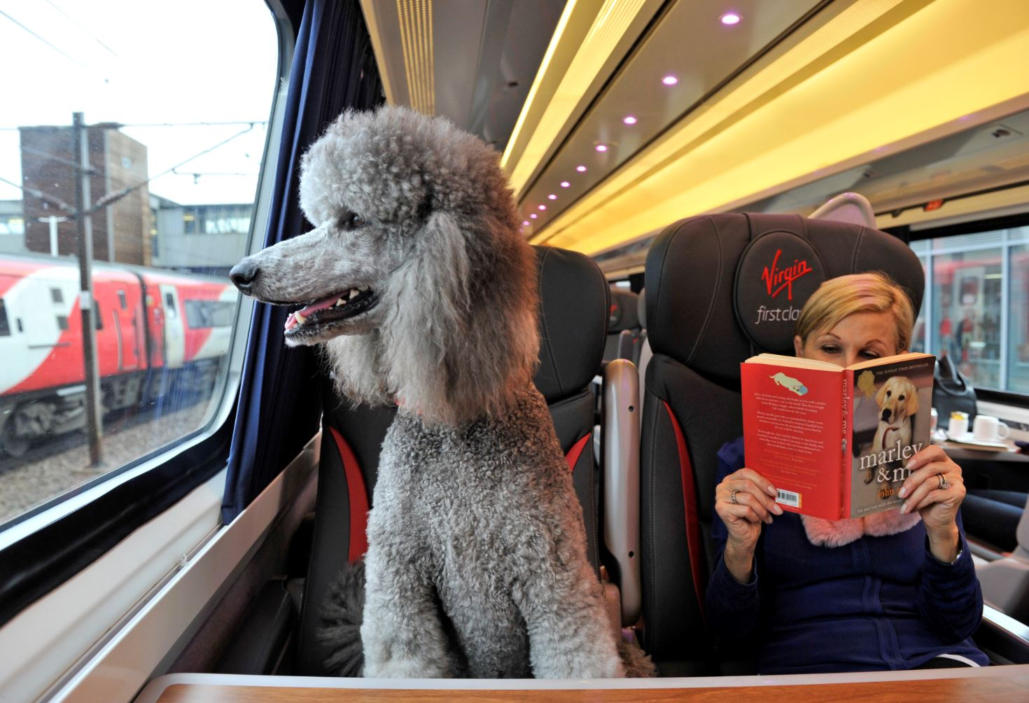 Can Dogs Travel On Virgin Trains