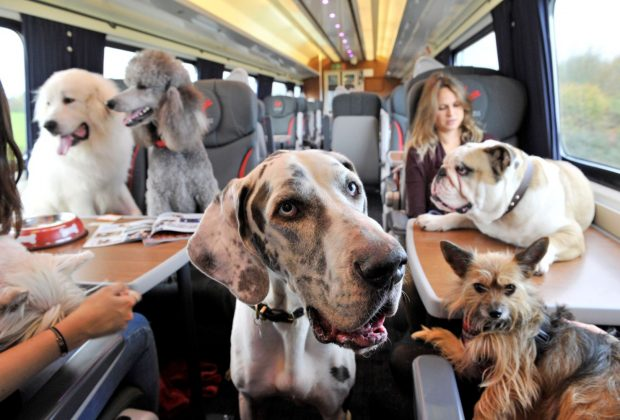 Pets on a train; Helping families come together this Christmas, Virgin Trains welcomes up to two dogs, cats or other small domestic animals with every customer.