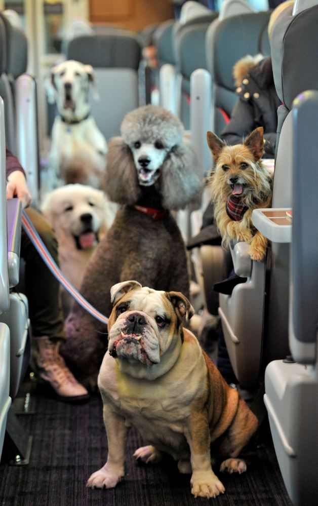 Lead the way: Helping families come together this Christmas, Virgin Trains welcomes up to two dogs, cats or other small domestic animals with every customer.