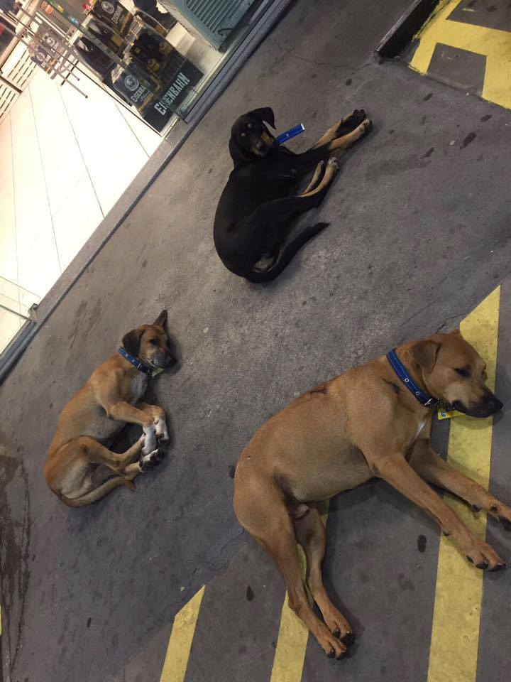 Petrol station dogs