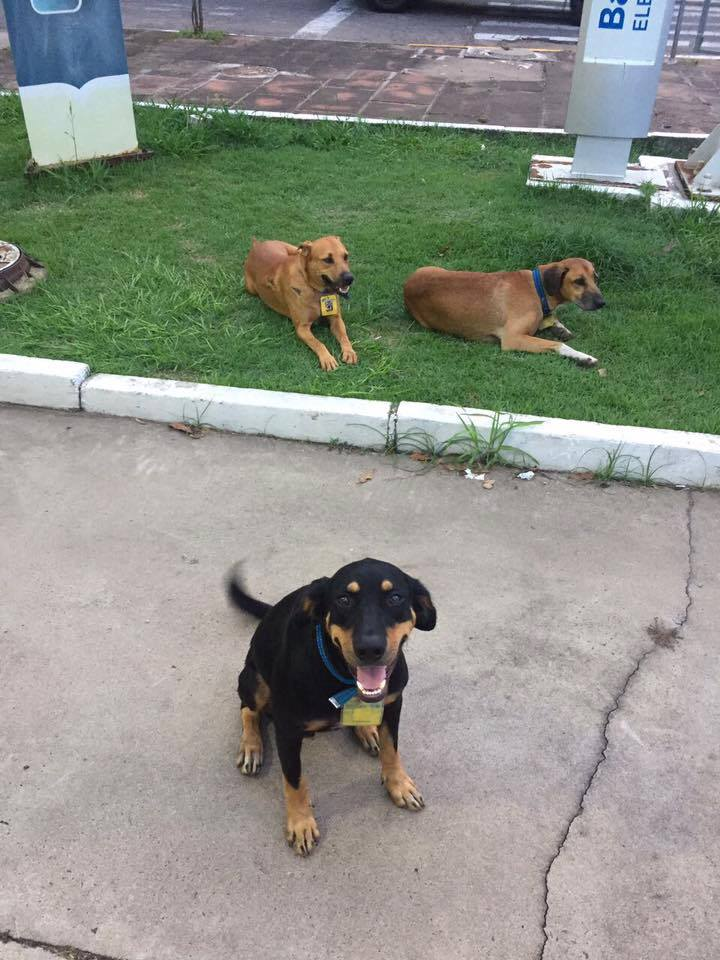 Petrol station dog