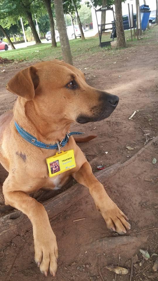 brown dog on the job