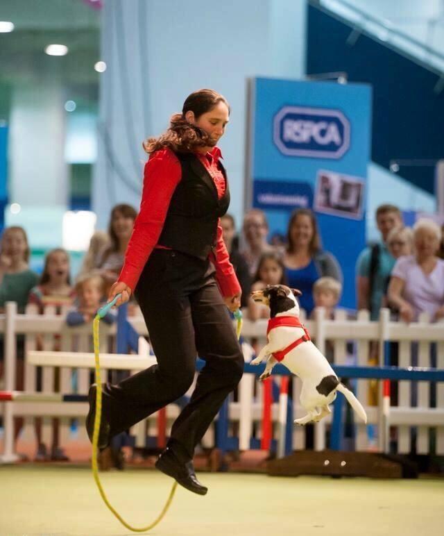 dog and human skipping