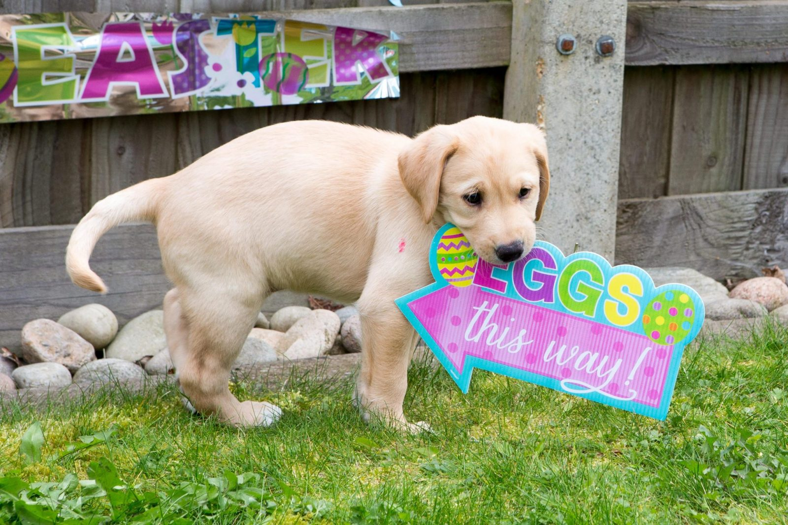 puppy with a sign
