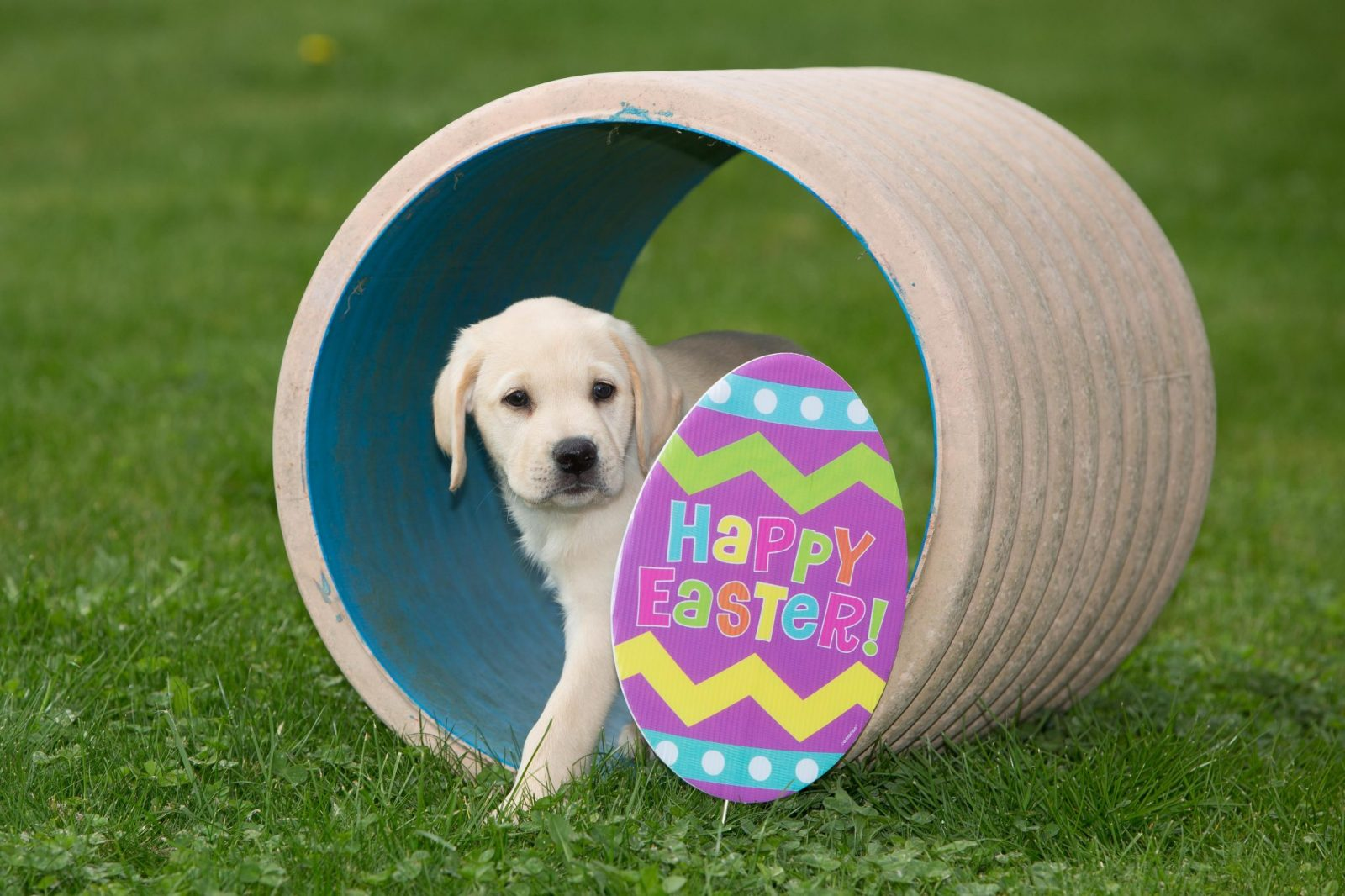 puppy with an egg