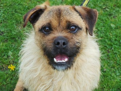 Kenilworth dog trust header