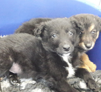 seized puppies