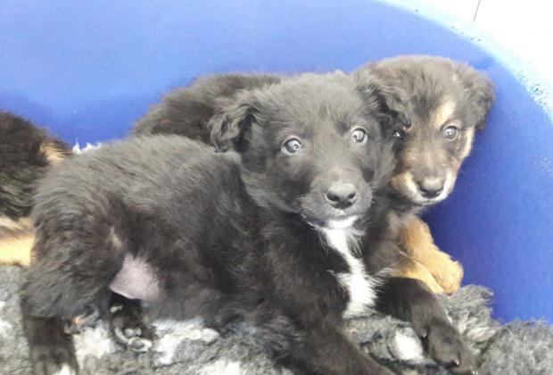 seized puppies