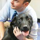 Dog checked for Parvovirus