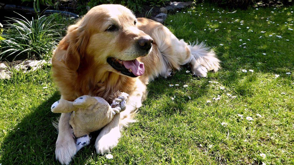 canine-dermatitis