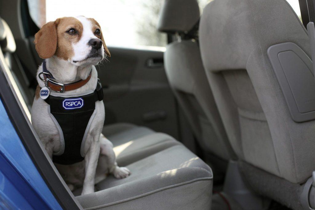 keep pets safe
