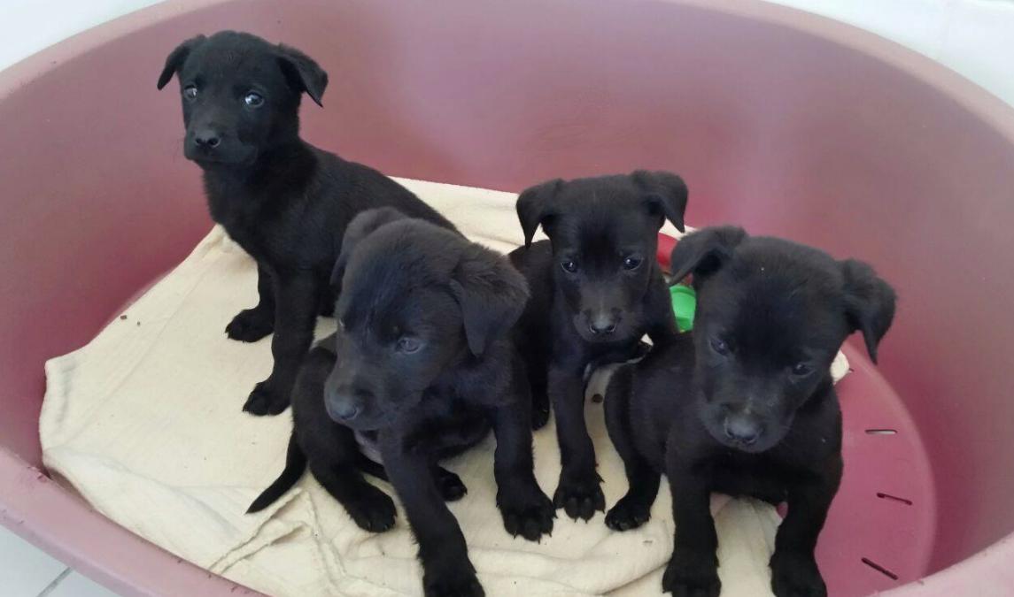 puppies intercepted