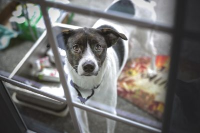 Battersea animal welfare