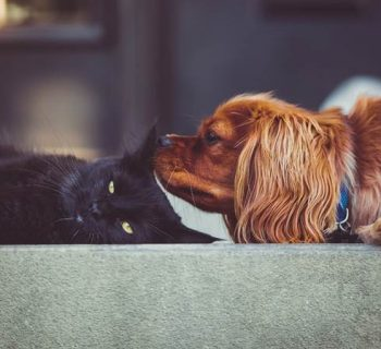 cat people or dog people