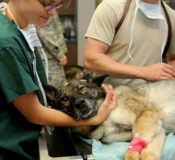 EU vets care for dog