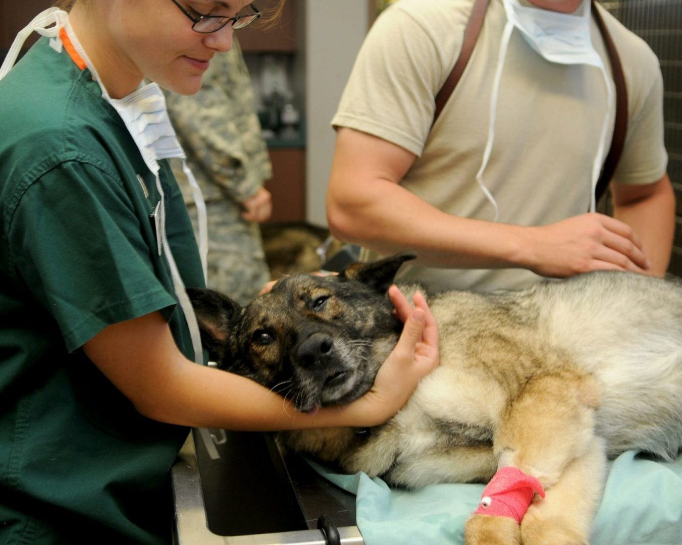 EU vets care for dog