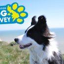 dog survey