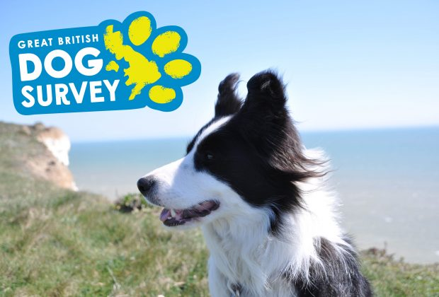 dog survey