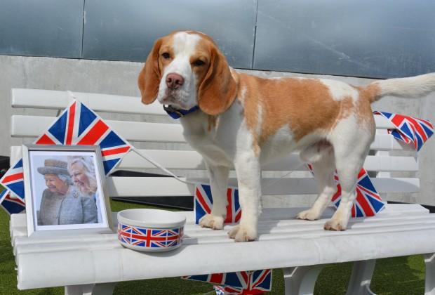 Beagle Dog Rescue Centre