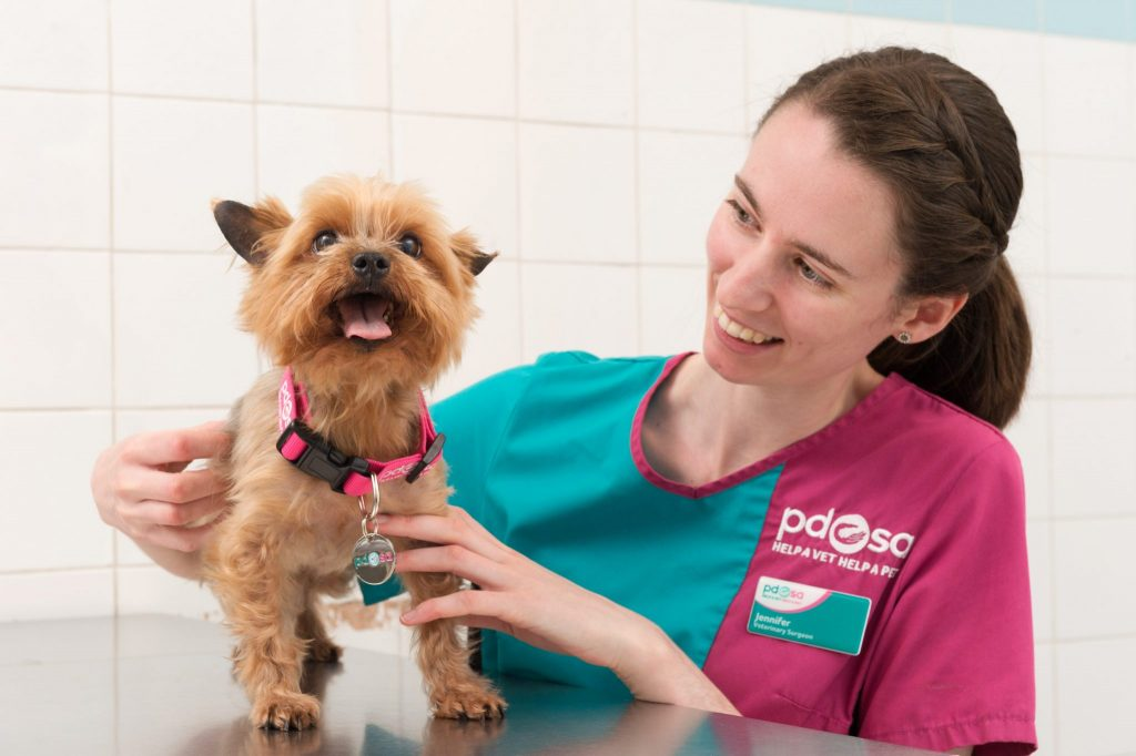 The People's Dispensary for Sick Animals (PDSA), Edinburgh PDSA PetAid Hospital, 4/12/15 : Cooper, a Yorkshire Terrier who underwent emergency surgery after eating 22 hair bobbles and a button. Pictured with Jennifer Lee (Veterinary Surgeon). Pic free for first use relating to PDSA. © Malcolm Cochrane Photography +44 (0)7971 835 065 mail@malcolmcochrane.co.uk No syndication No reproduction without permission