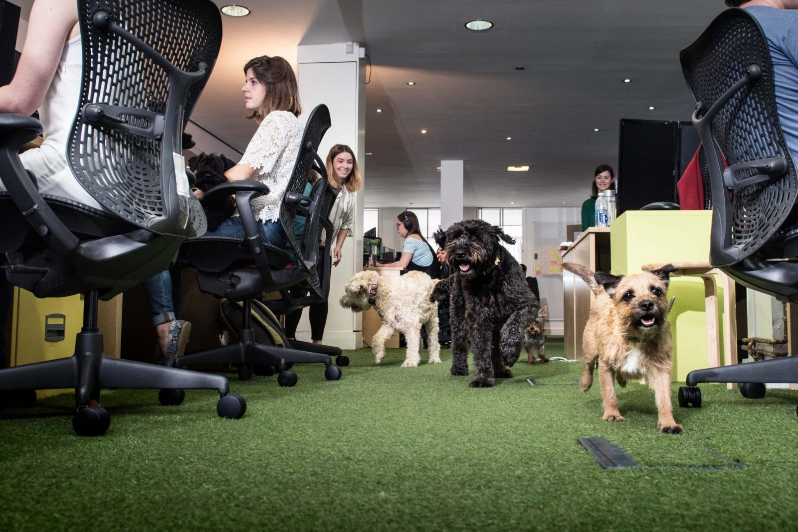 Thursday 23rd June 2016: Inside the HQ of tails.com, where it's Bring Your Dog To Work Day everyday. The tailor-made dog food company says that having a dog in the office boosts staff productivity, and according to its Vet Sean McCormack it makes the dogs happier too. For further information please contact Neil Broderick at Shine Communications on 07850 508 412 or at Neil@shinecom.com PR Handout - free for editorial usage only Copyright: © Mikael Buck / Tails.com