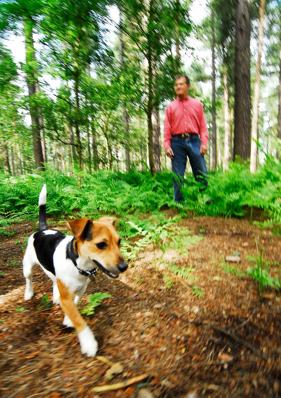 A man and dog walking in Cannock Chase, Staffordshire