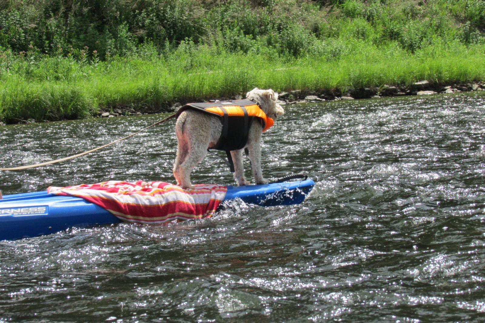 Baleigh Birchurt, USA Kayaking